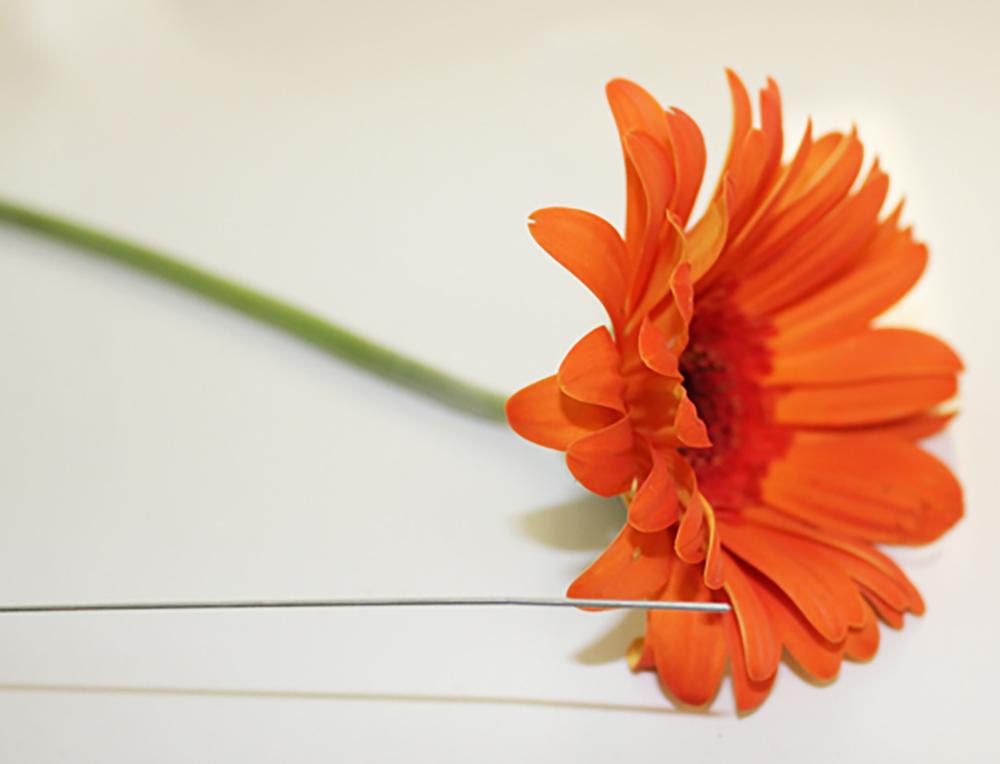florist gerber daisy