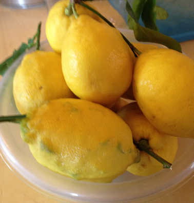Limoncello from Amalfi