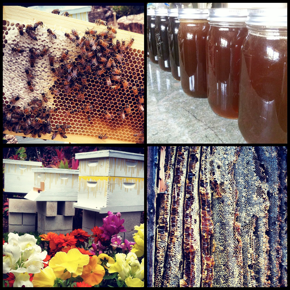 Honey Collage